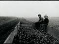 Krompir, 1976