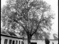 Drevo 2, 2011